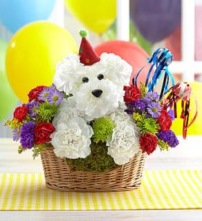 Another Year Rover