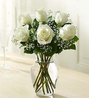 White Rose Elegance